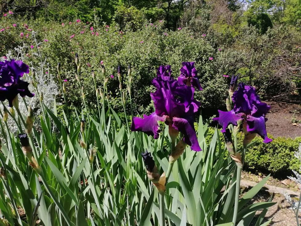 El Thyssen y el Botánico se unen en Un paseo entre las flores