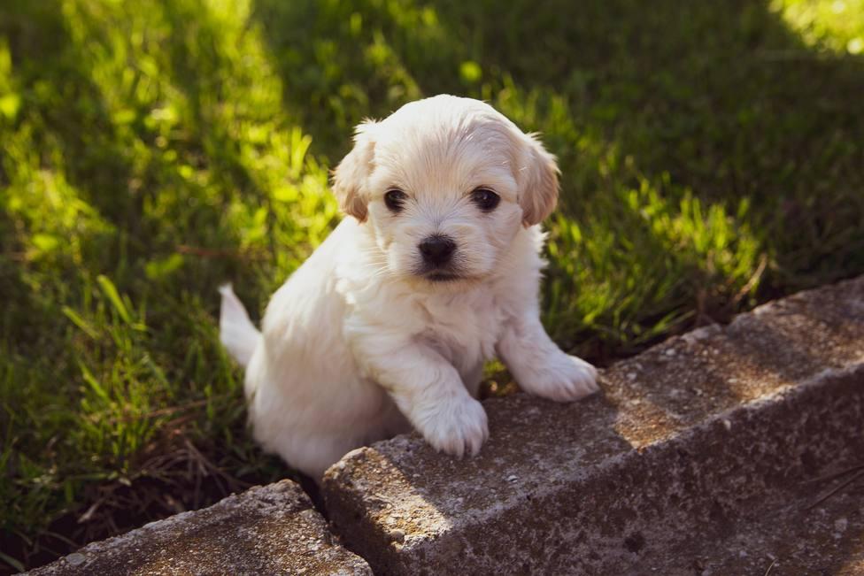 Cómo evitar los ladridos excesivos de tu perro