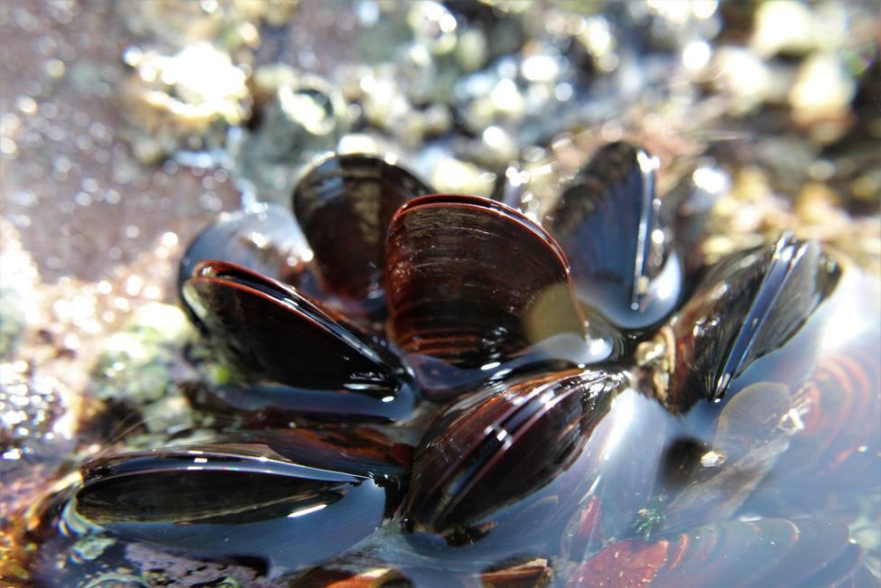 ctv-sn2-mussel-4867351 1920