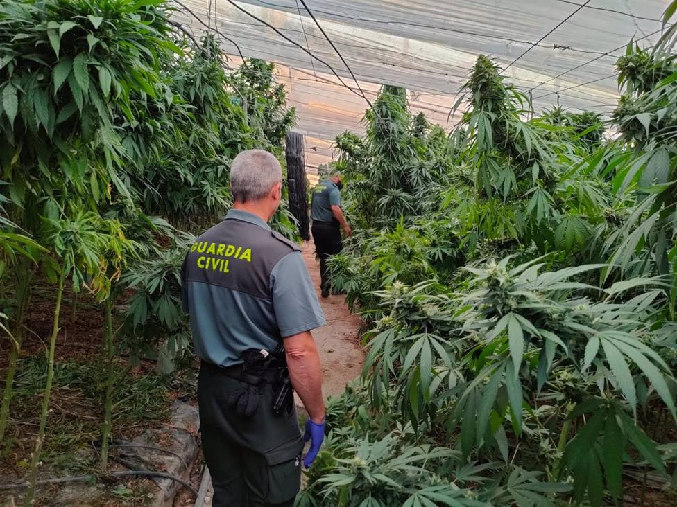 Granada.- Sucesos.- La Guardia Civil se incauta de 9.600 plantas de cannabis sativa en Cuevas del Campo