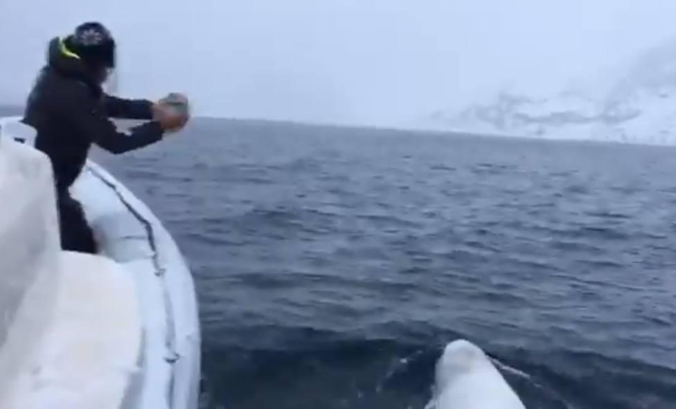 El espectacular vídeo de rugby entre un hombre y una ballena que ha compartido Pérez-Reverte