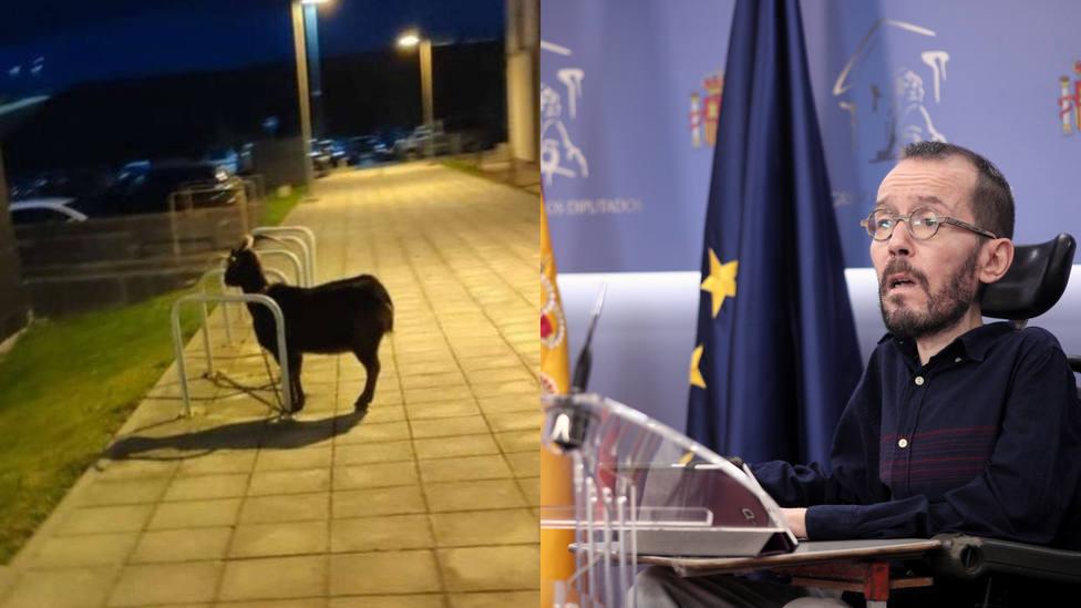 La cabra aparcada en Santander y la ironía de Echenique, entre lo más leído de este martes