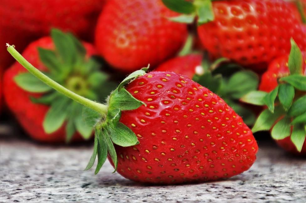 Descubierto un nuevo gen que modula la maduración de la fresa