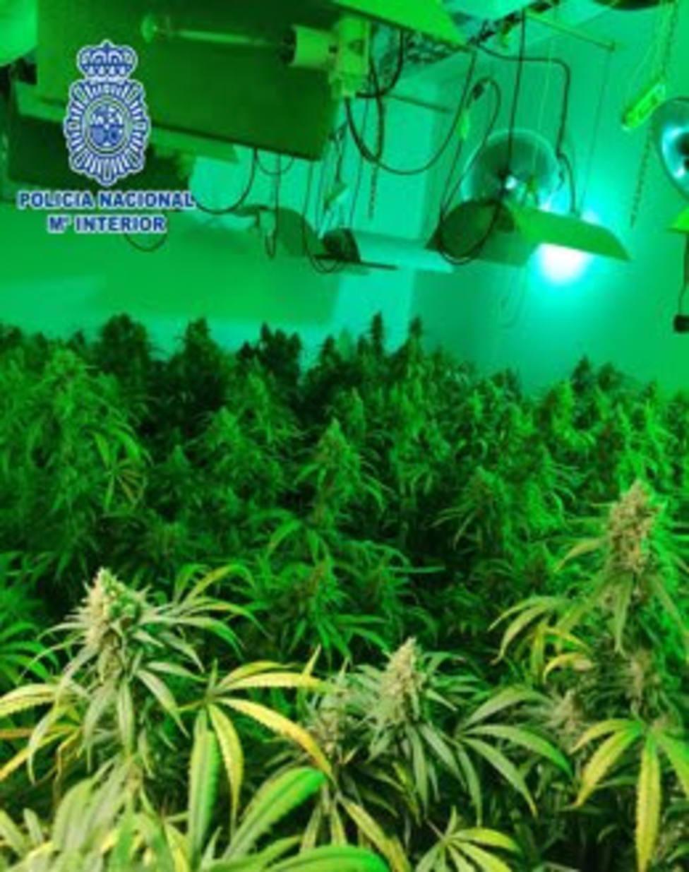 Una de las plantaciones de marihuana.