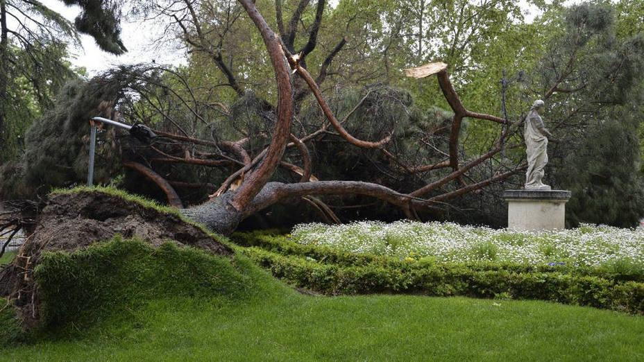 Un árbol caído en el Retiro (Madrid)