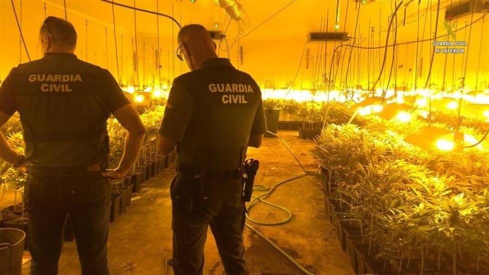 Plantación Marihuana