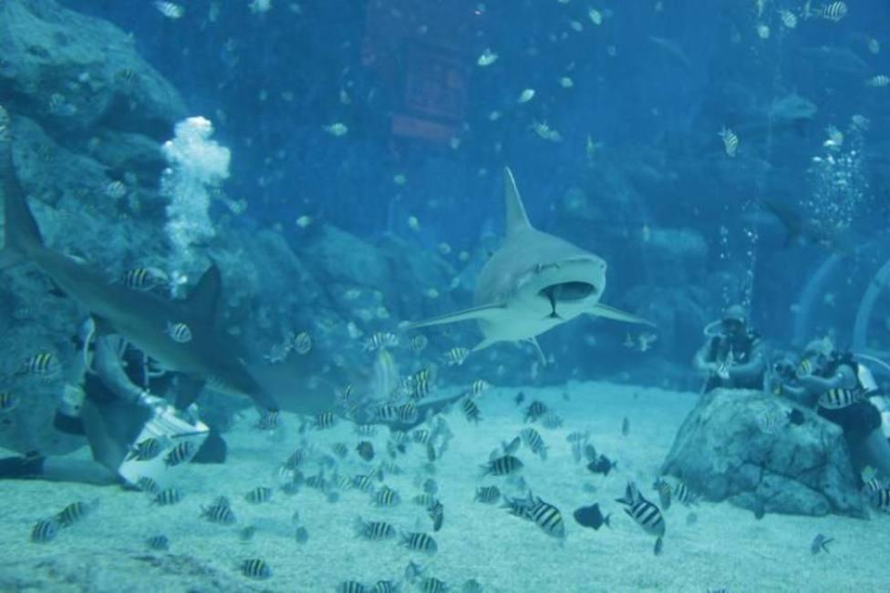 Terror en la playa por dos ataques de tiburón en menos de cinco minutos