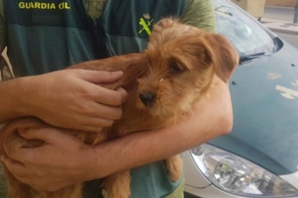 La Guardia Civil ha investigado a dos personas por tirar a un perro desde un puente en Navarra