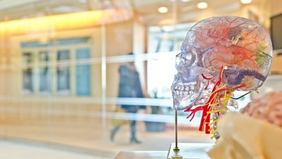 Desarrollan un nuevos método para medir la atrofia de la médula espinal