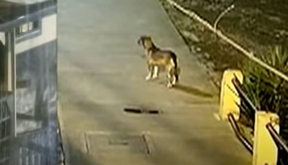 Un perro callejero presencia un robo y su reacción dejó a todos sin palabras