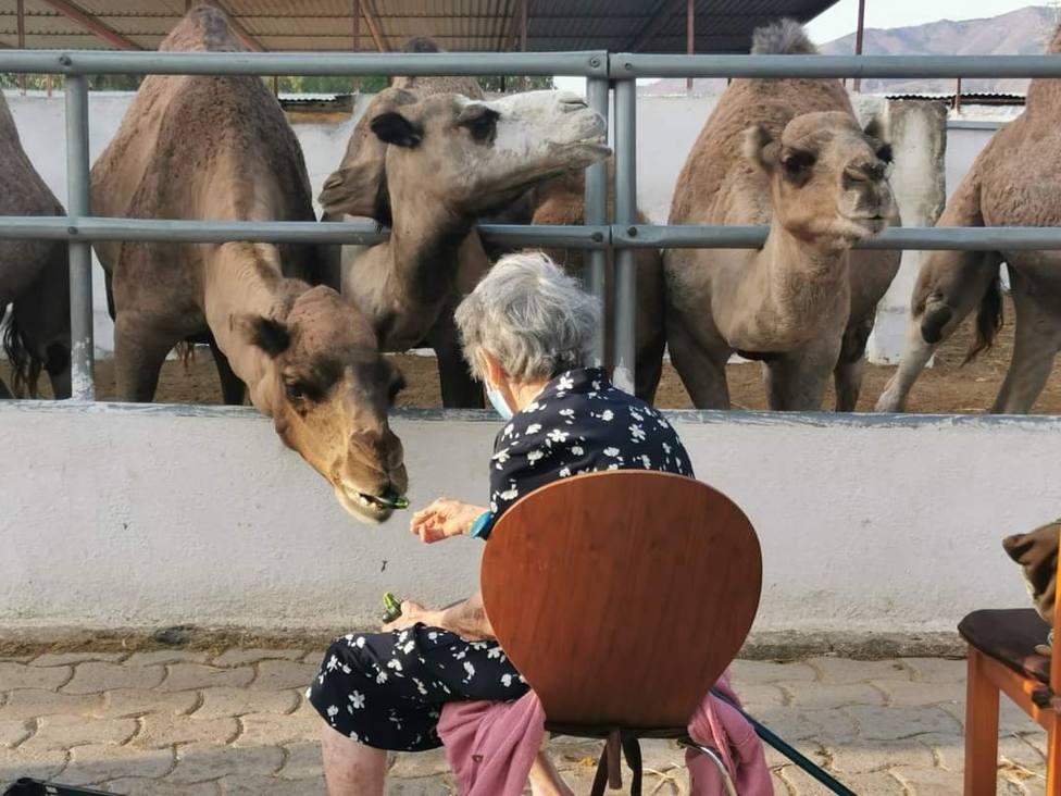 Los asombrosos beneficios para la salud de la leche de camella
