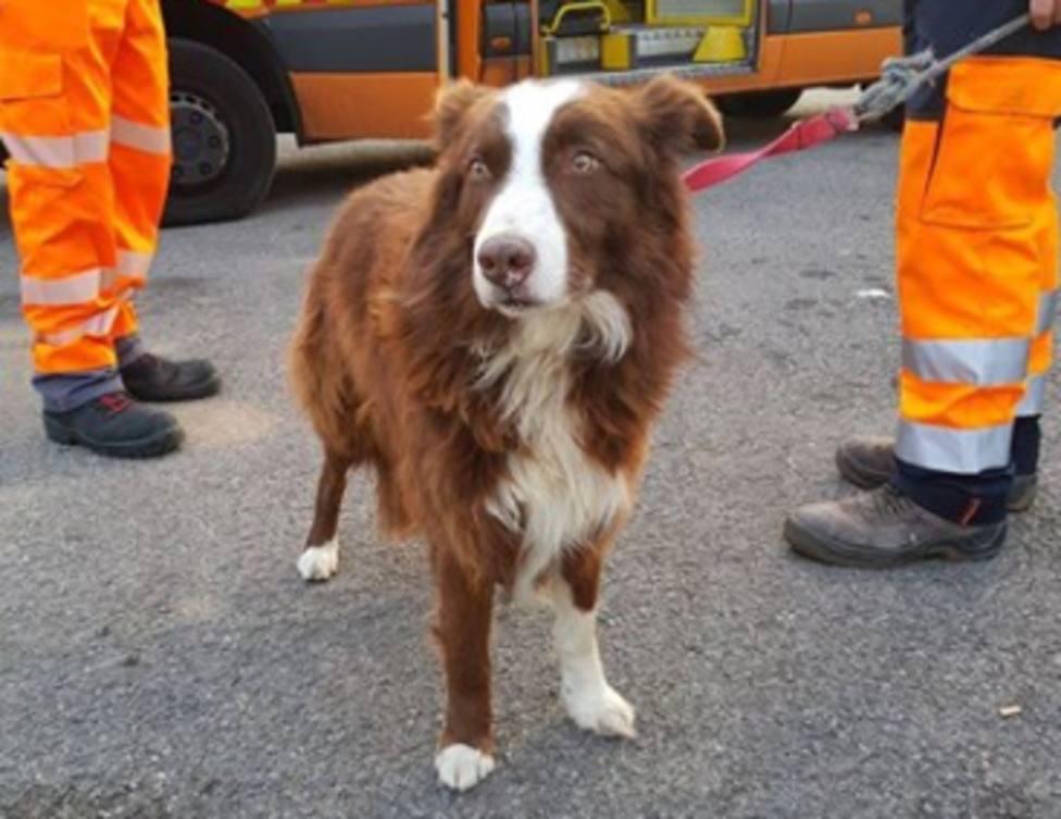 La increíble razón por la que este perro corría por una autopista de Barcelona