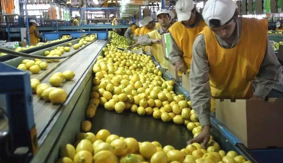 ctv-m4d-limones-de-argentina