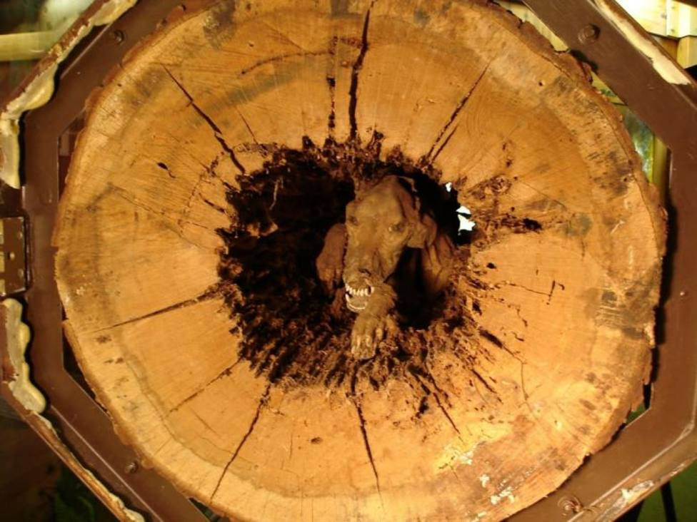 Descubren un perro momificado en el interior de un árbol y su origen deja a todos boquiabiertos
