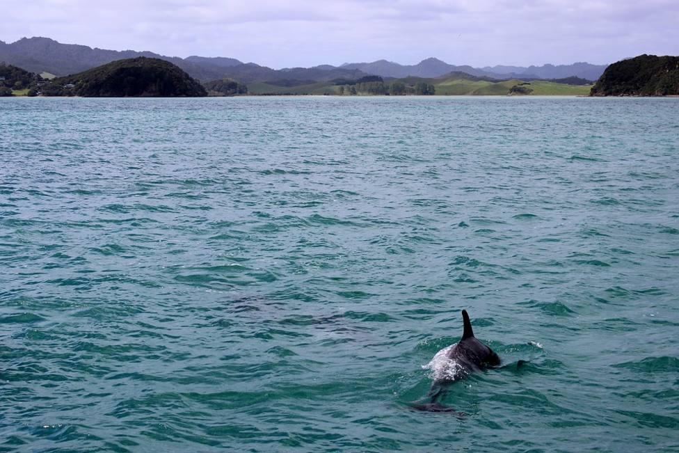 ctv-9dg-delfin