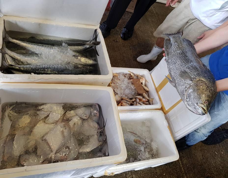 Os socialistas alertan da caída libre do sector da pesca en Lugo