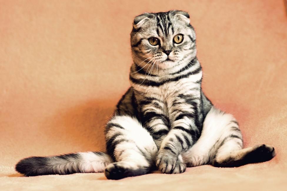 La compañía de un gato promueve mejoras físicas y psicológicas