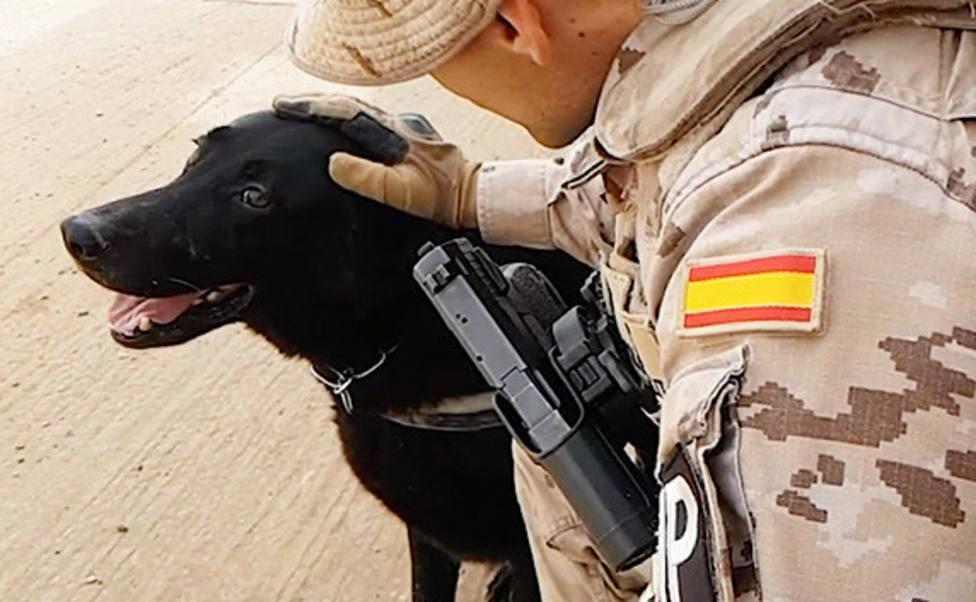 El futuro que le espera a Hulk, el perro que protege al Ejército español en Irak, a punto de jubilarse