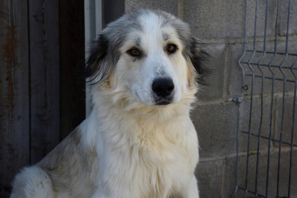 Watorre, uno de los perros que estuvo en el centro de acogida de animales