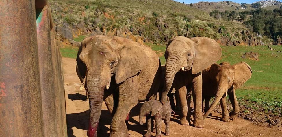ctv-ppo-elefantes-cabarceno