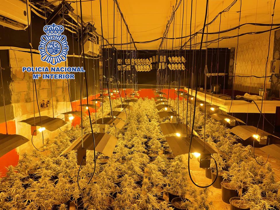 La Policía Nacional desmantela en Almería una plantación de marihuana oculta en los bajos de un restaurante