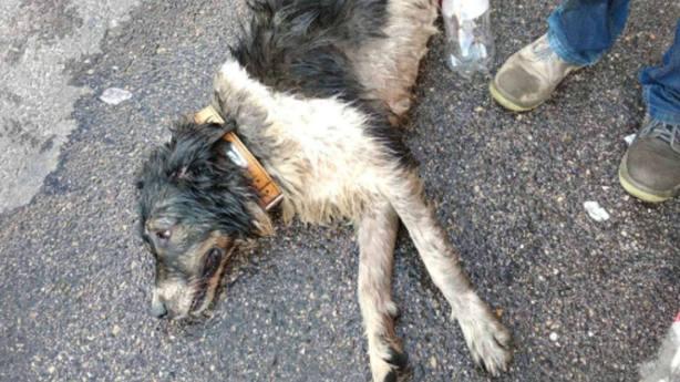 Perro | Policía local Fuenlabrada