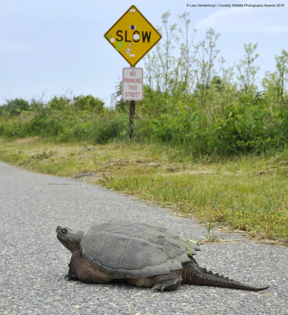 ctv-rat-840898lisa-vanderhoop-snarling-snappin-in-the-slow-lane-00004642jpg