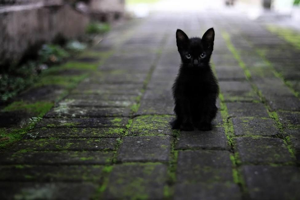 ctv-pil-gato-callejero