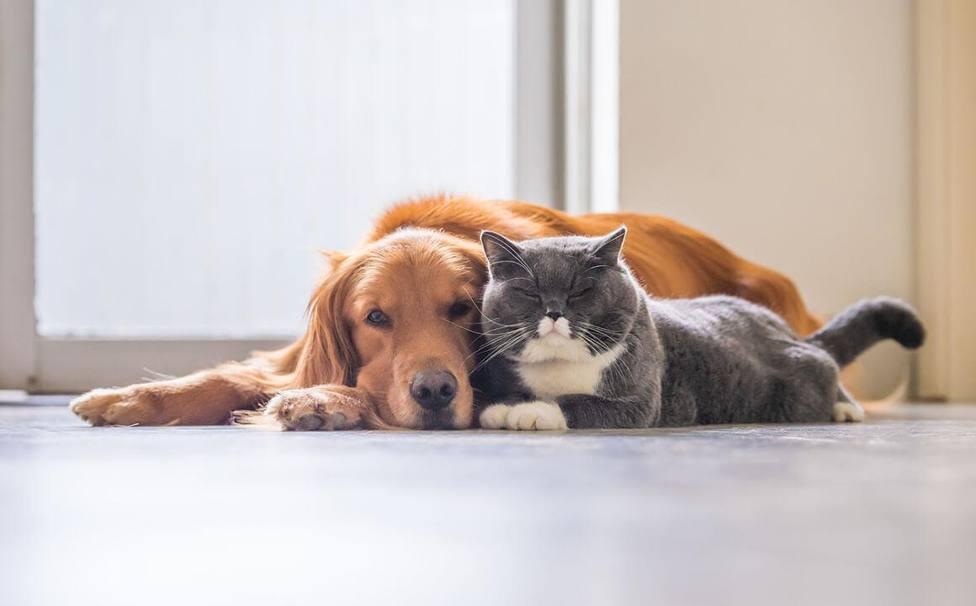 ¿Cómo son los perros y gatos recogidos por las protectoras en 2020?