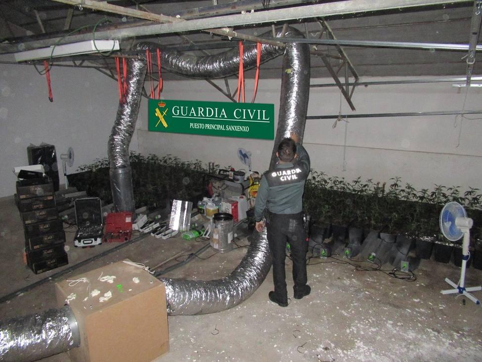 La Guardia Civil interviene una plantación de marihuana en Samieira (Poio)