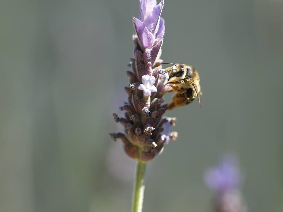 La Eurocámara pide reducir el uso de pesticidas y mejorar la investigación para salvar a las abejas