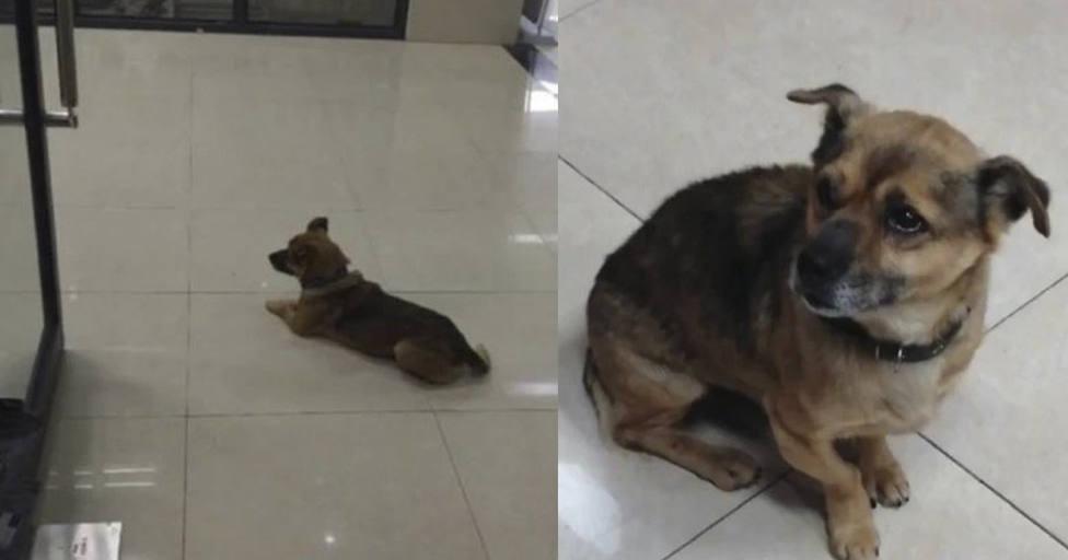 Un perro va todos los días al hospital durante tres meses y la verdadera razón rompe el corazón de todos