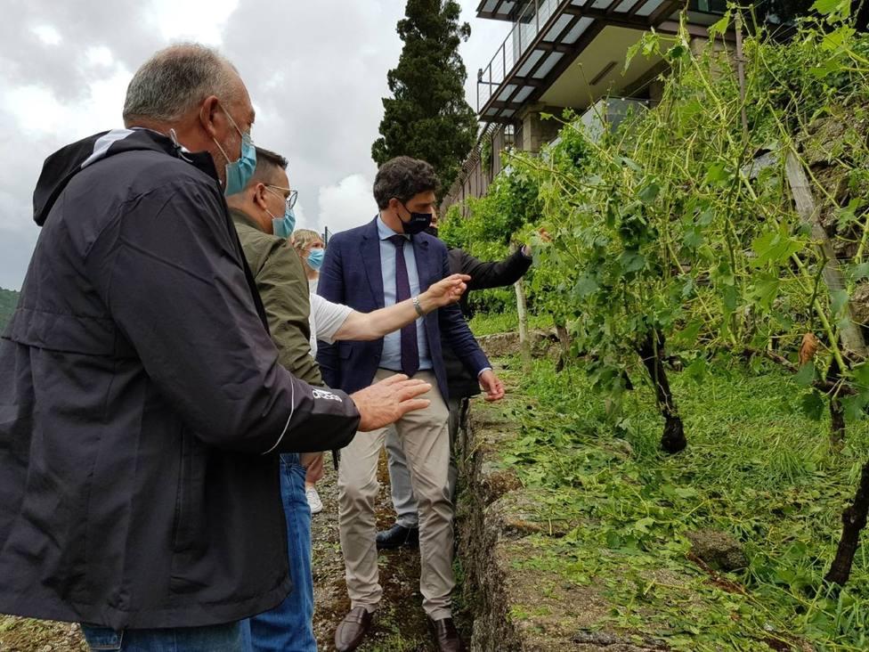 El conselleiro do Medio Rural comprueba los daños provocados por el granizo en los viñedos de Chantada