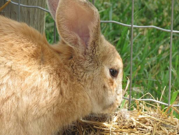 ctv-cm3-93-bunny-696x522