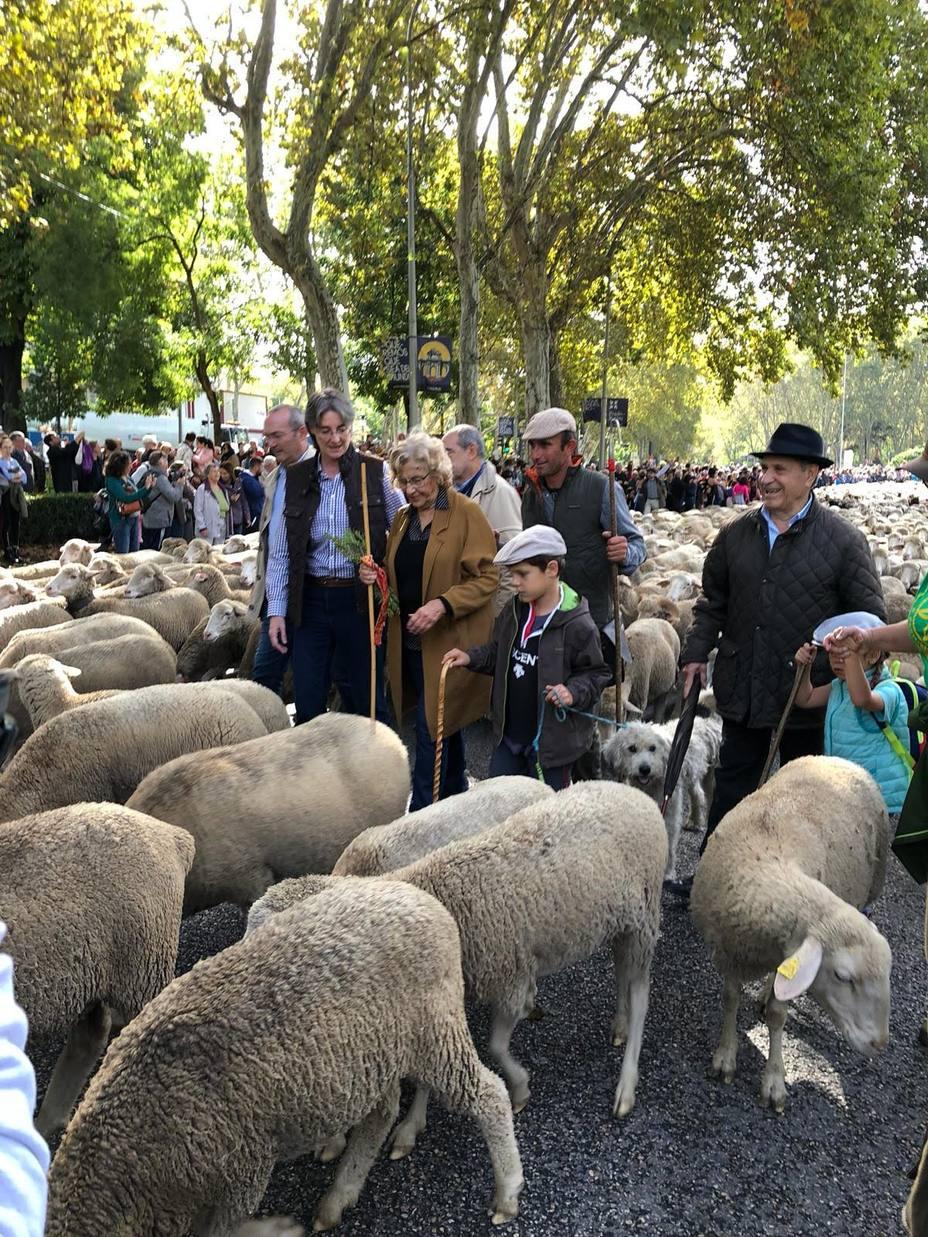 Más de 1.500 ovejas y 100 cabras recorren Madrid en el 25 aniversario de la Fiesta de la Transhumancia