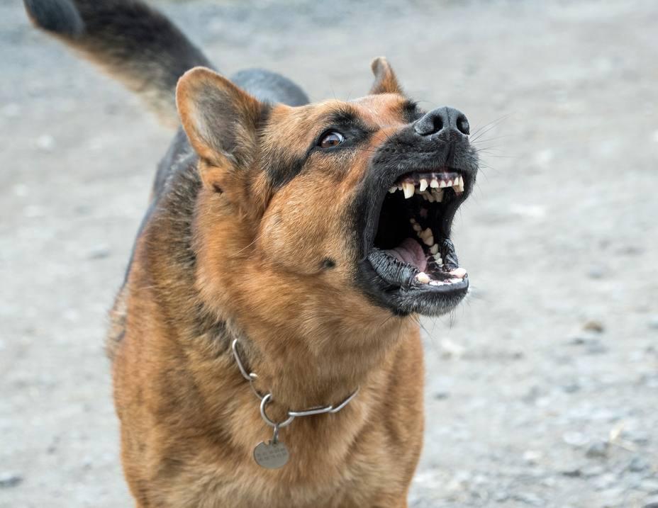 Perro peligroso | Pixabay