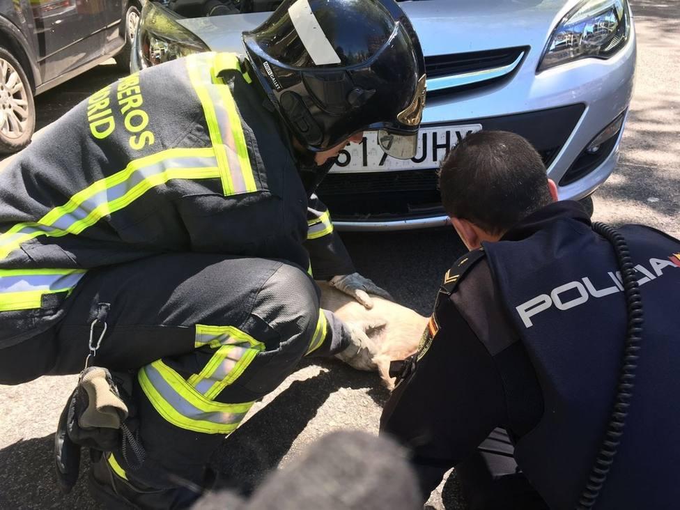 Anillos atascados y rescate de animales, las otras intervenciones de los bomberos