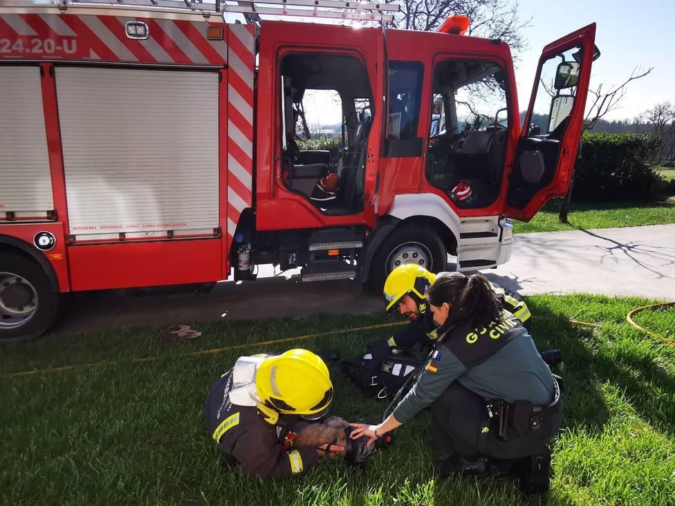 Rescatan de un incendio a un cachorro de cuatro meses inconsciente y consiguen reanimarlo
