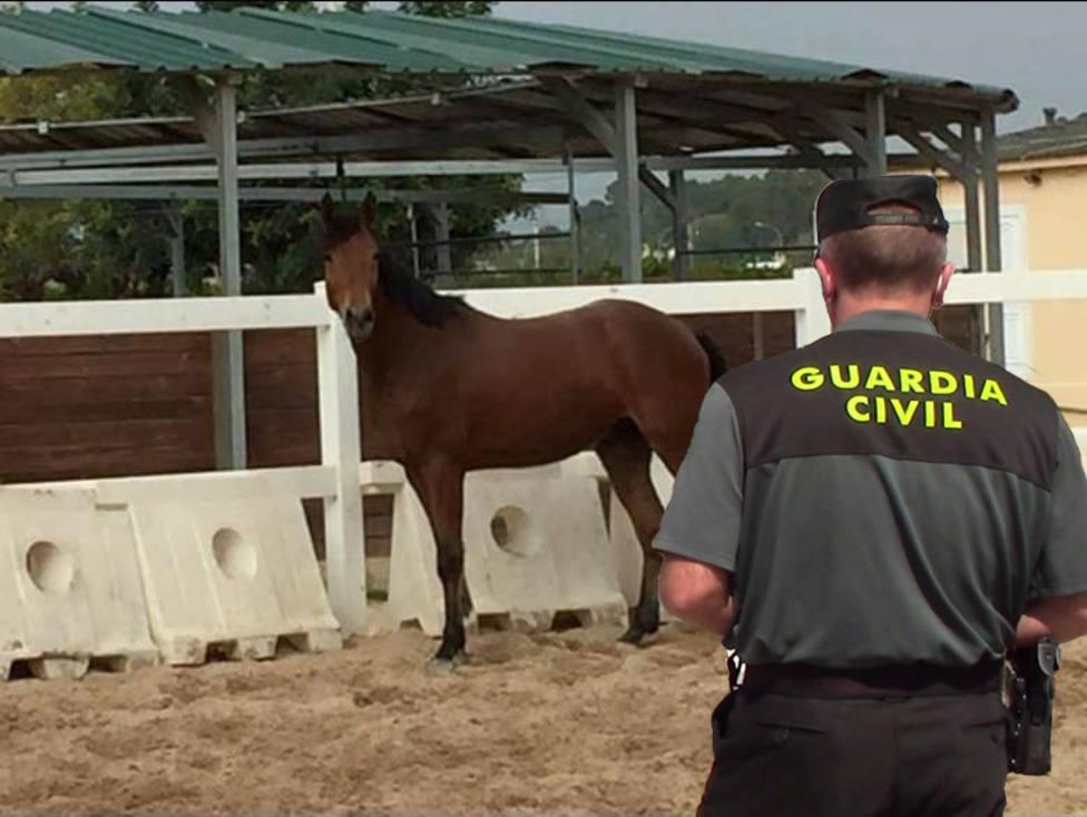 ctv-kya-20201007-caballo-recuperado-2