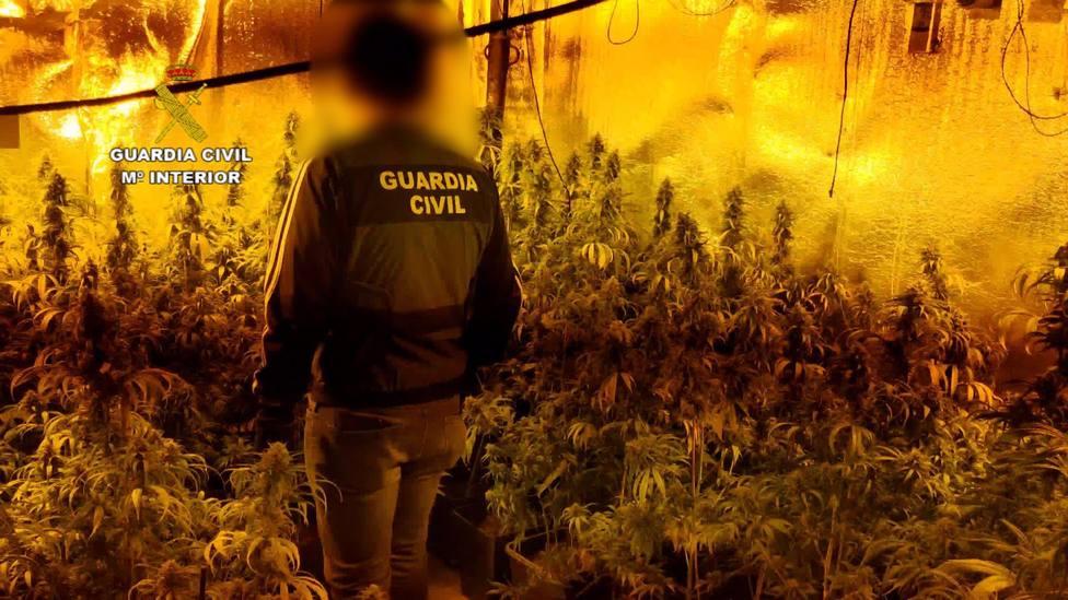 Sucesos.- Detienen a 7 personas e incautan 1.846 plantaciones de marihuana en dos plantaciones de Galápagos y El Casar