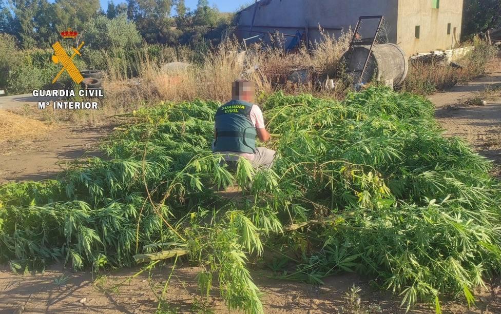 ctv-z1e-thumbnail plantacin-de-marihuana-desmantelada-por-la-guardia-civil