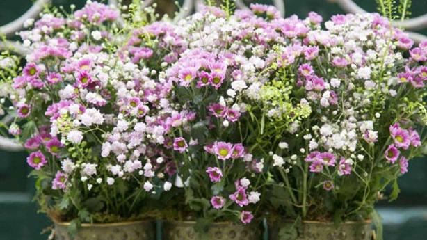 Centro de Alfabia Flores