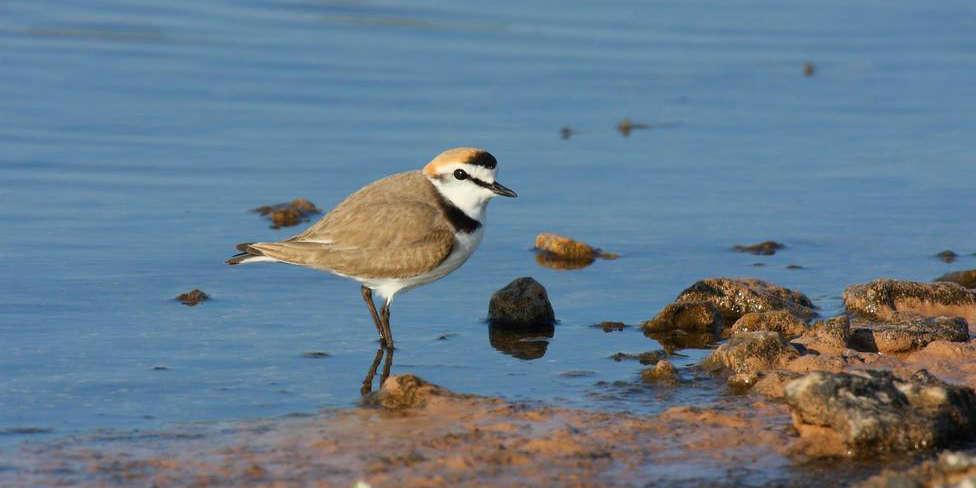 Campaña en Arousa para proteger la píllara das dunas