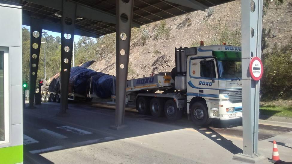 La ballena muerta en la costa asturiana llevaba varios días sin comer