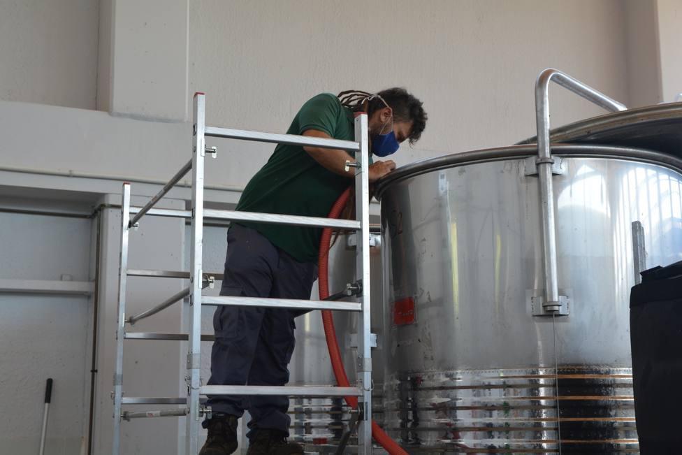 La UPCT elaborará 1.800 litros de vino de uva merseguera