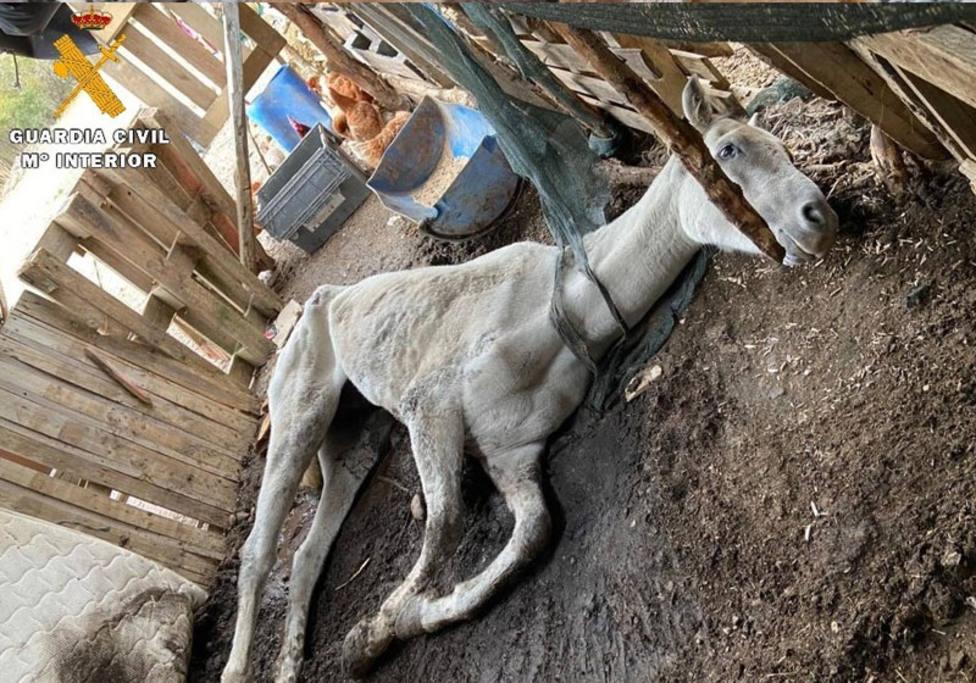 La Guardia Civil investiga a una persona por un supuesto delito de maltrato animal