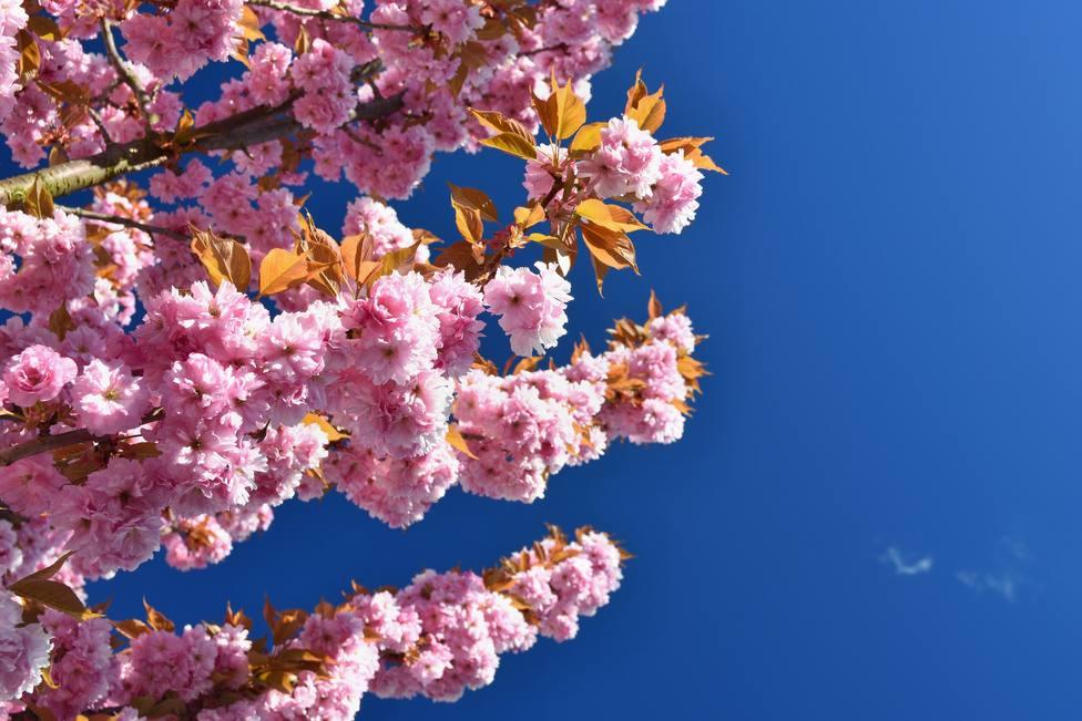 Lluvioso o soleado ¿qué tiempo nos espera en mayo?