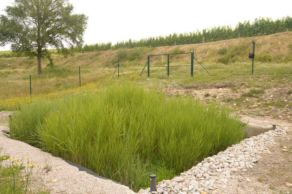 Ejemplo de humedal de tratamiento que será diseñado y operado por AIMEN en LIFE GREEN ADAPT