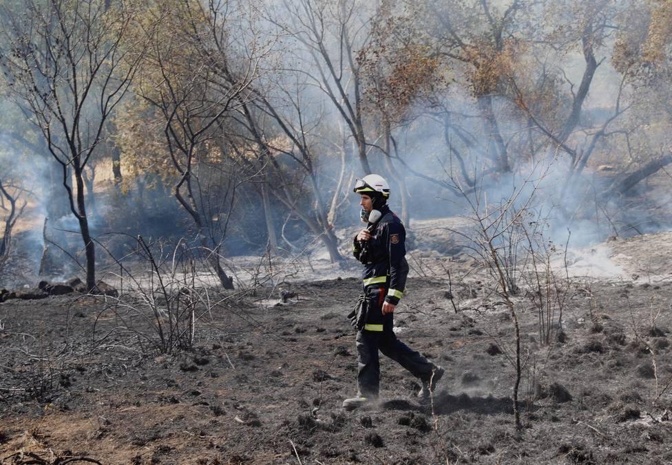 Agricultura destina 1,4 millones a paliar los efectos del fuego en Madrid, C-LM y CyL