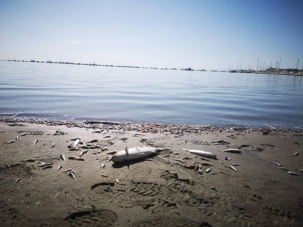FAVCAC no permitirá que se pilitice la manifestación sobre el Mar Menor